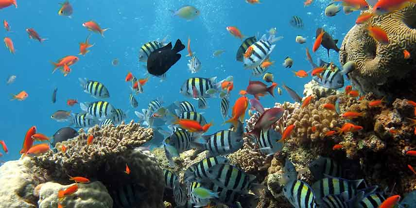 A reef with tropical fish